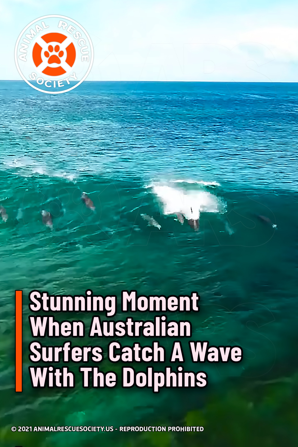 Stunning Moment When Australian Surfers Catch A Wave With The Dolphins