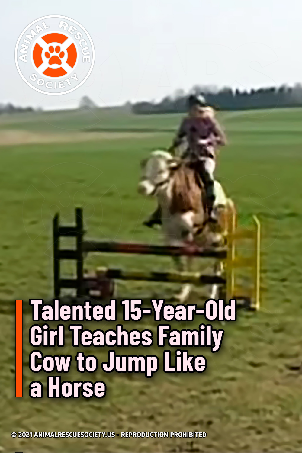 Talented 15-Year-Old Girl Teaches Family Cow to Jump Like a Horse
