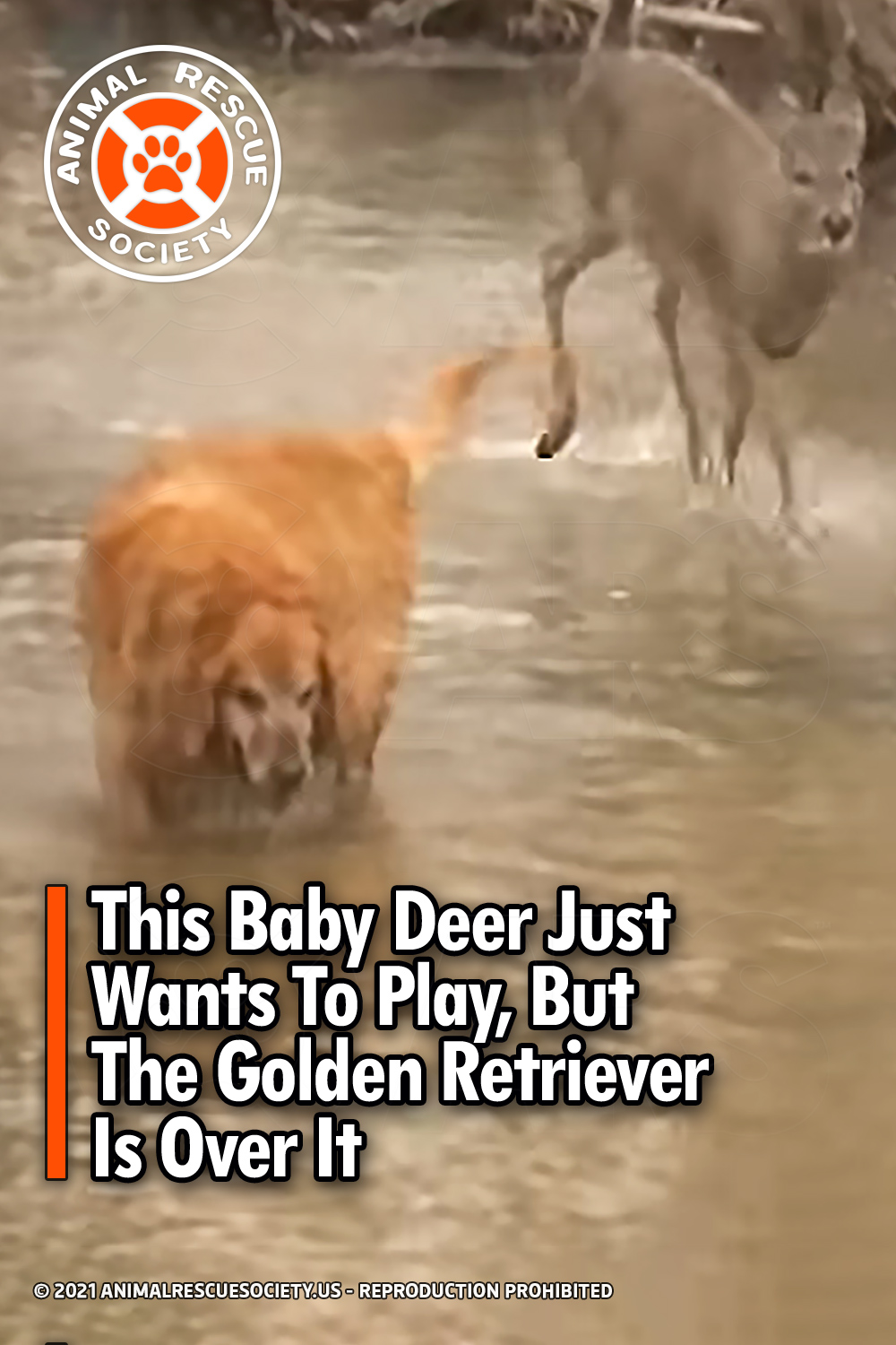 This Baby Deer Just Wants To Play, But The Golden Retriever Is Over It