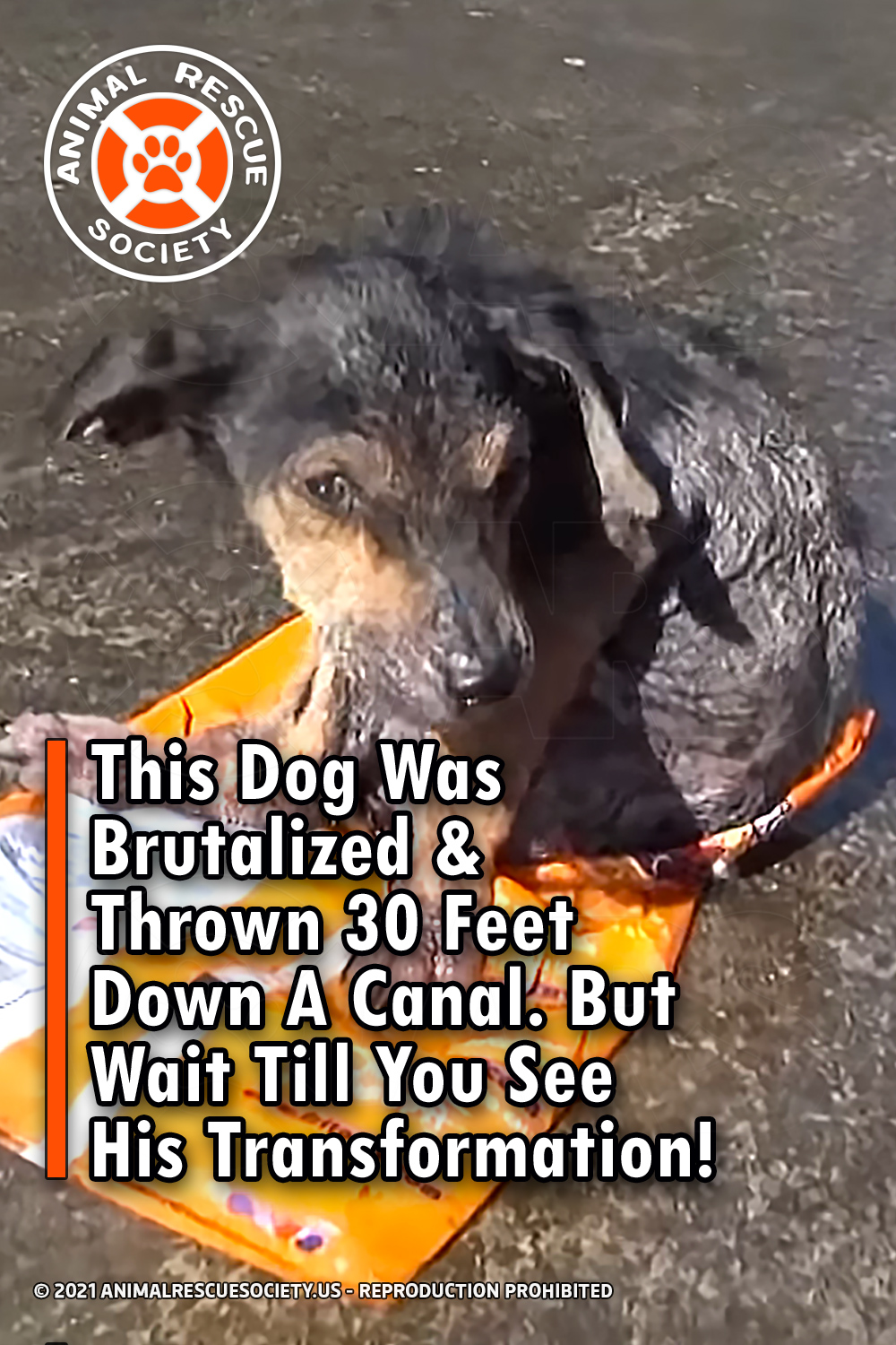 This Dog Was Brutalized & Thrown 30 Feet Down A Canal. But Wait Till You See His Transformation!