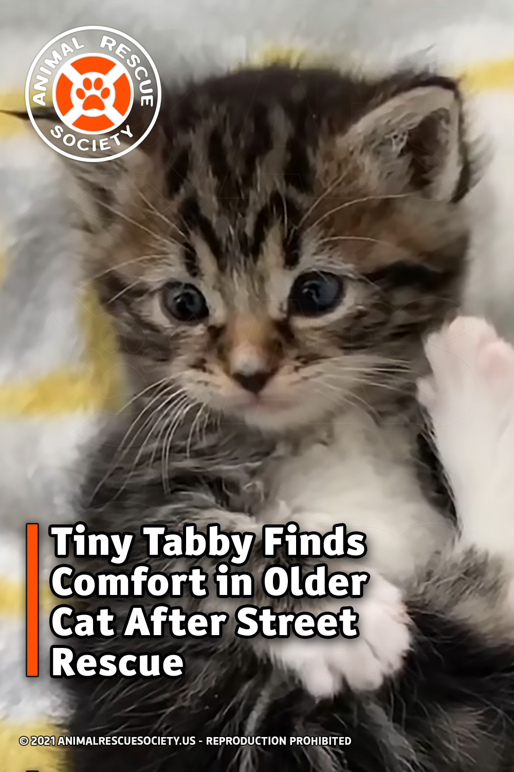Tiny Tabby Finds Comfort in Older Cat After Street Rescue