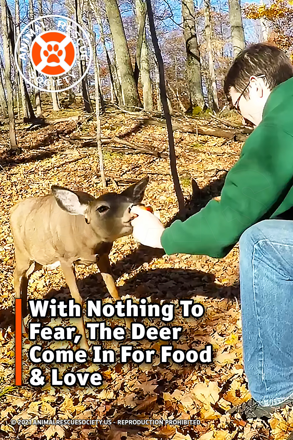 With Nothing To Fear, The Deer Come In For Food & Love