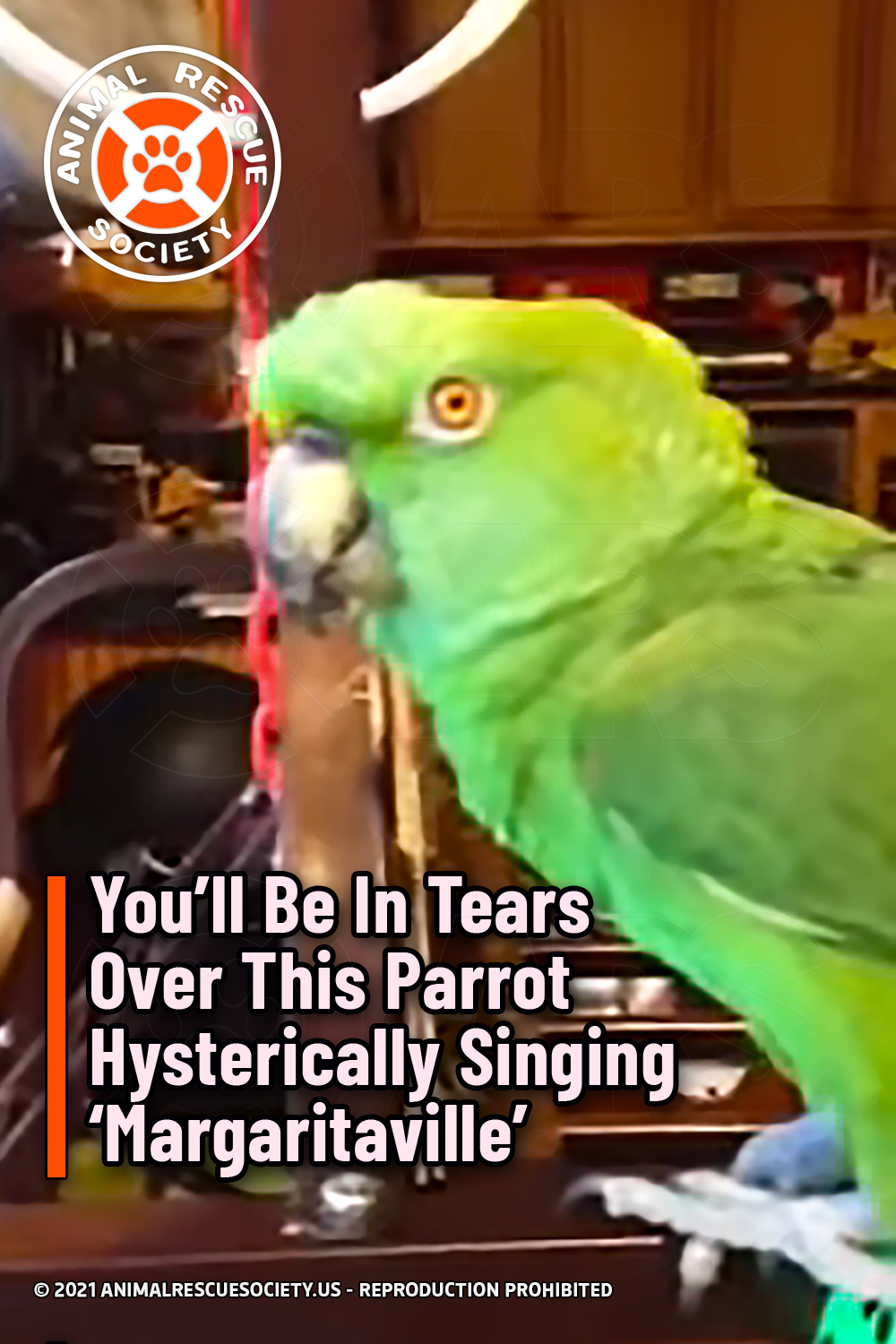 You'll Be In Tears Over This Parrot Hysterically Singing 'Margaritaville'