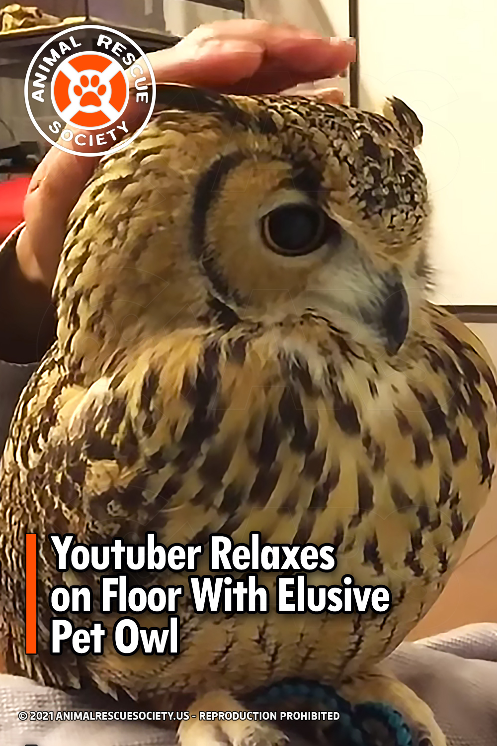 Youtuber Relaxes on Floor With Elusive Pet Owl