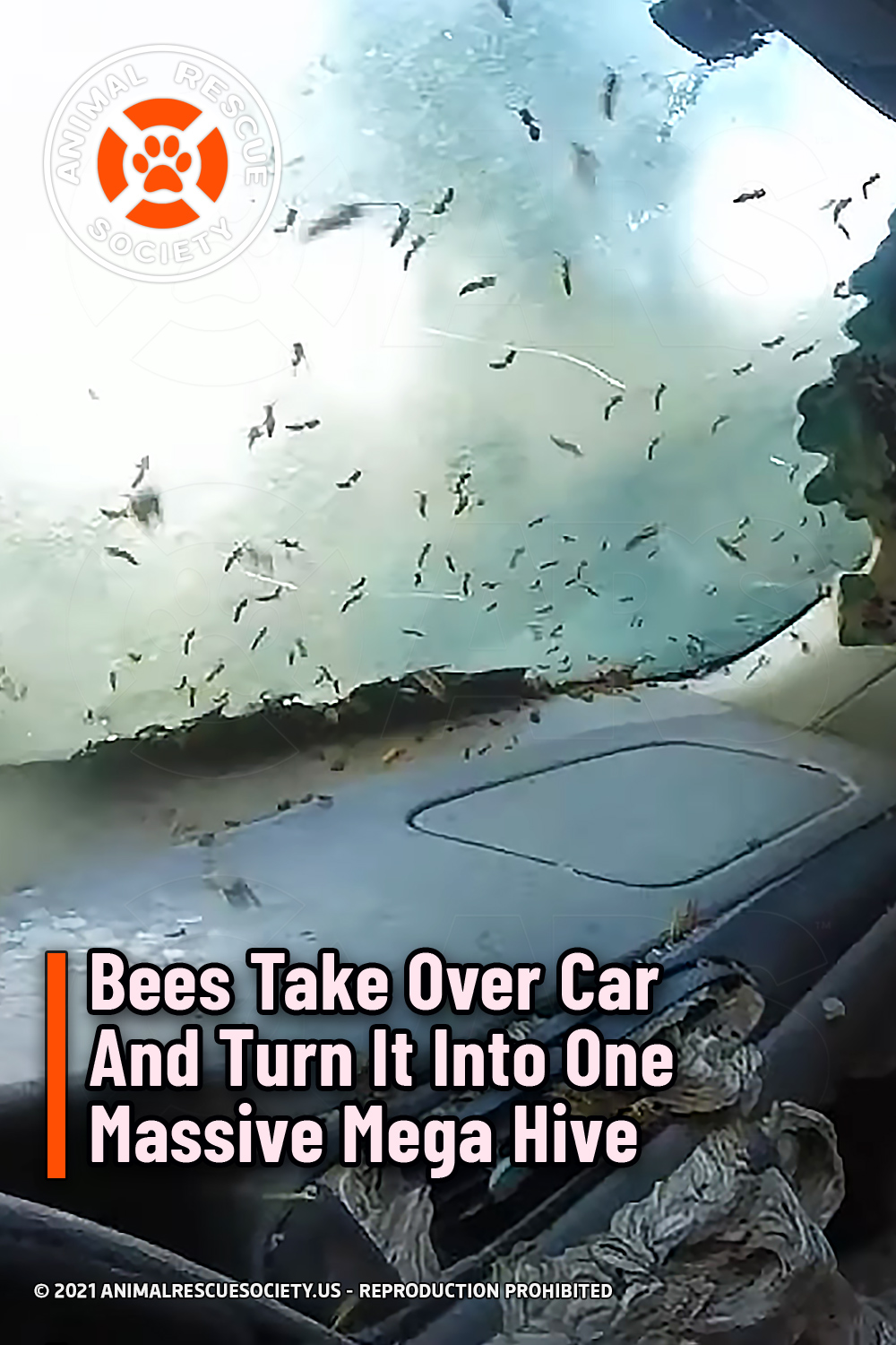 Bees Take Over Car And Turn It Into One Massive Mega Hive