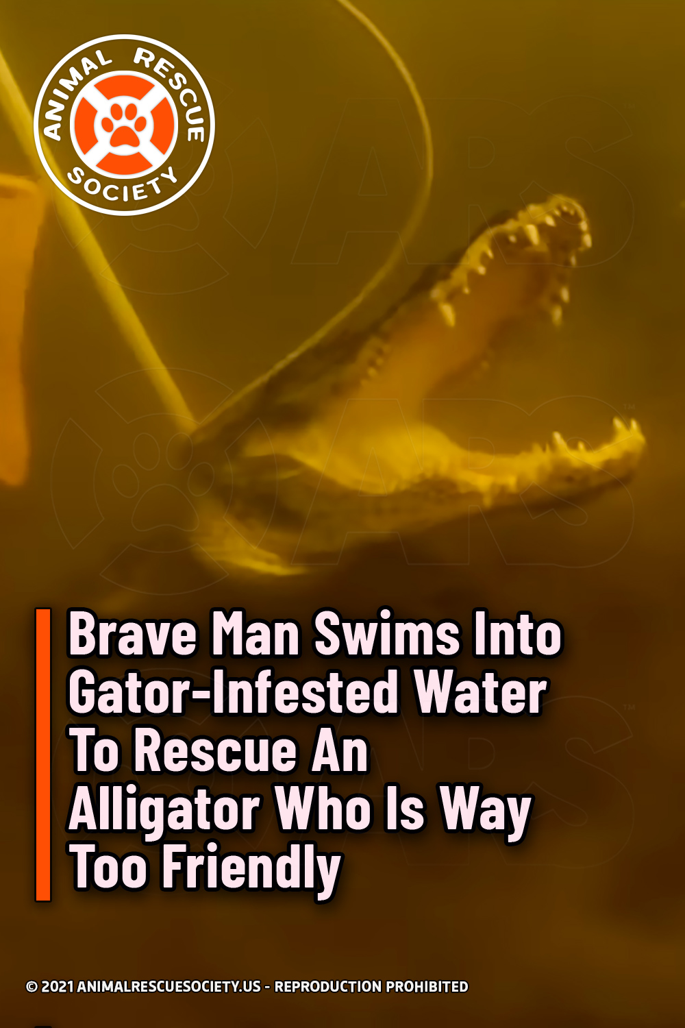 Brave Man Swims Into Gator-Infested Water To Rescue An Alligator Who Is Way Too Friendly