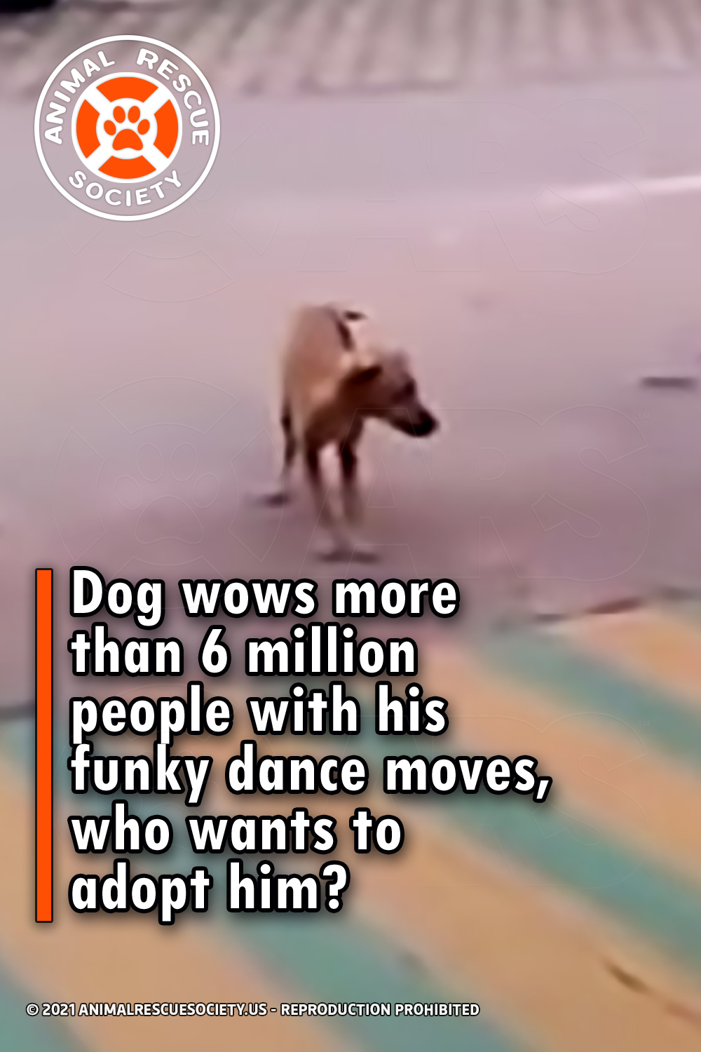 Dog wows more than 6 million people with his funky dance moves, who wants to adopt him?