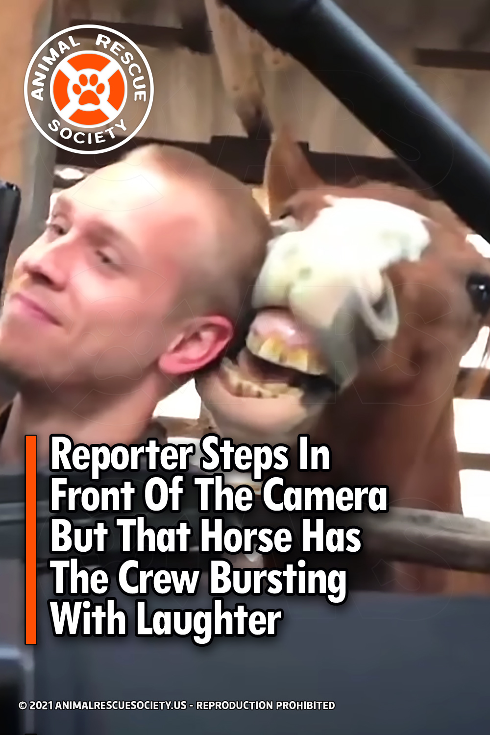 Reporter Steps In Front Of The Camera But That Horse Has The Crew Bursting With Laughter