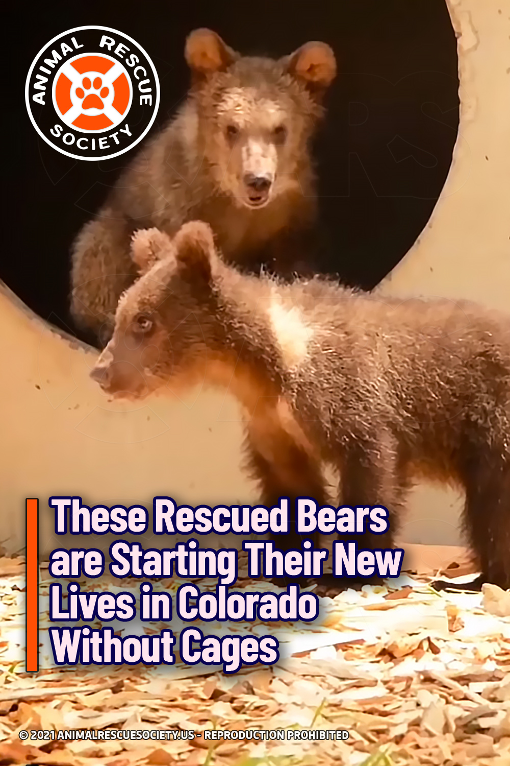 These Rescued Bears are Starting Their New Lives in Colorado Without Cages