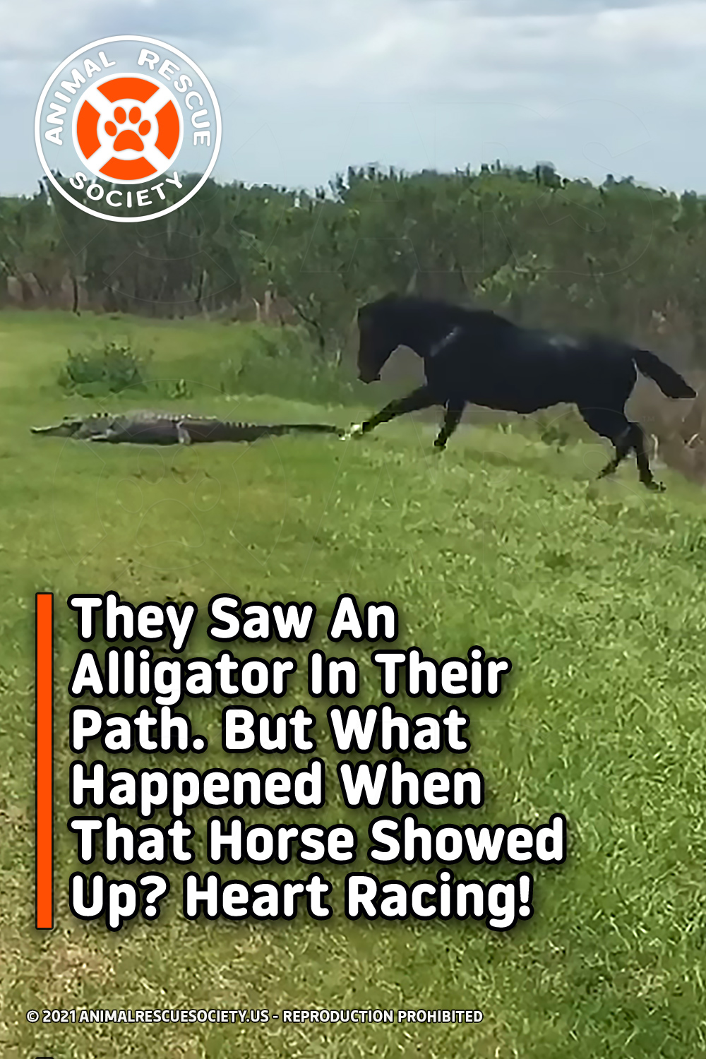 They Saw An Alligator In Their Path. But What Happened When That Horse Showed Up? Heart Racing!