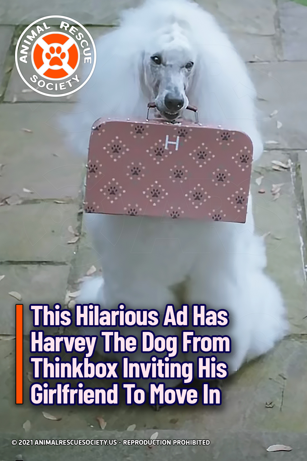 This Hilarious Ad Has Harvey The Dog From Thinkbox Inviting His Girlfriend To Move In