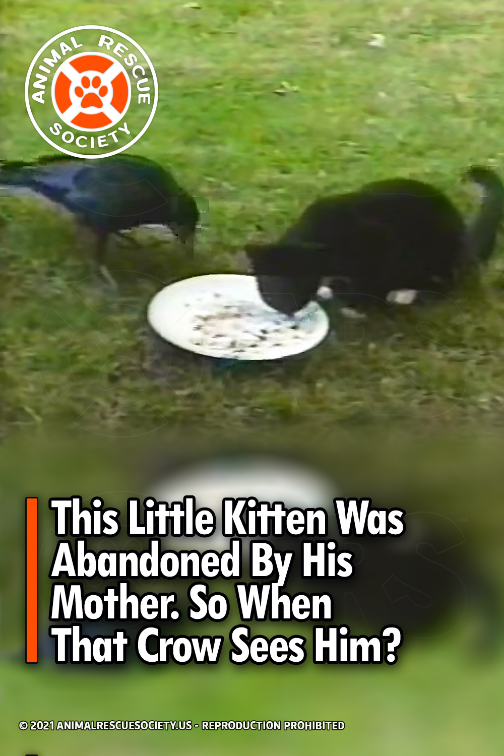 This Little Kitten Was Abandoned By His Mother. So When That Crow Sees Him?