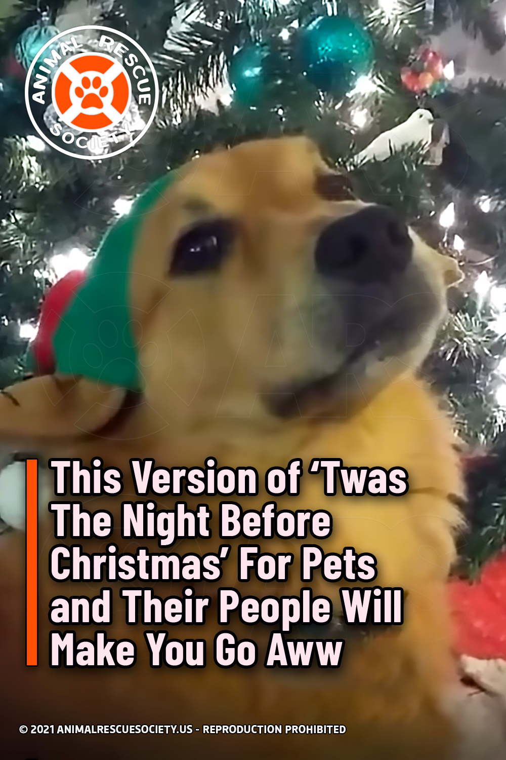This Version of 'Twas The Night Before Christmas' For Pets and Their People Will Make You Go Aww