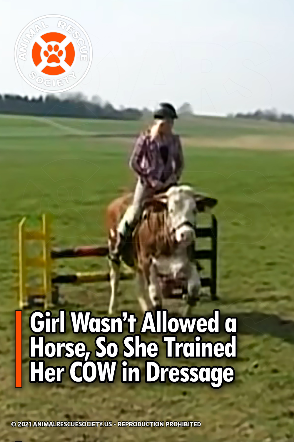 Girl Wasn't Allowed a Horse, So She Trained Her COW in Dressage