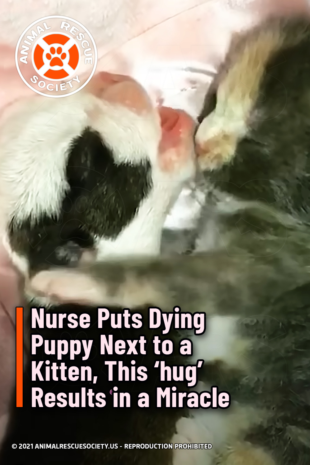 Nurse Puts Dying Puppy Next to a Kitten, This 'hug' Results in a Miracle
