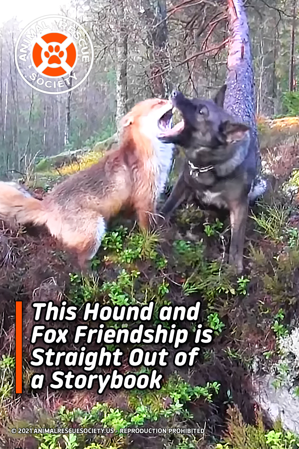 This Hound and Fox Friendship is Straight Out of a Storybook