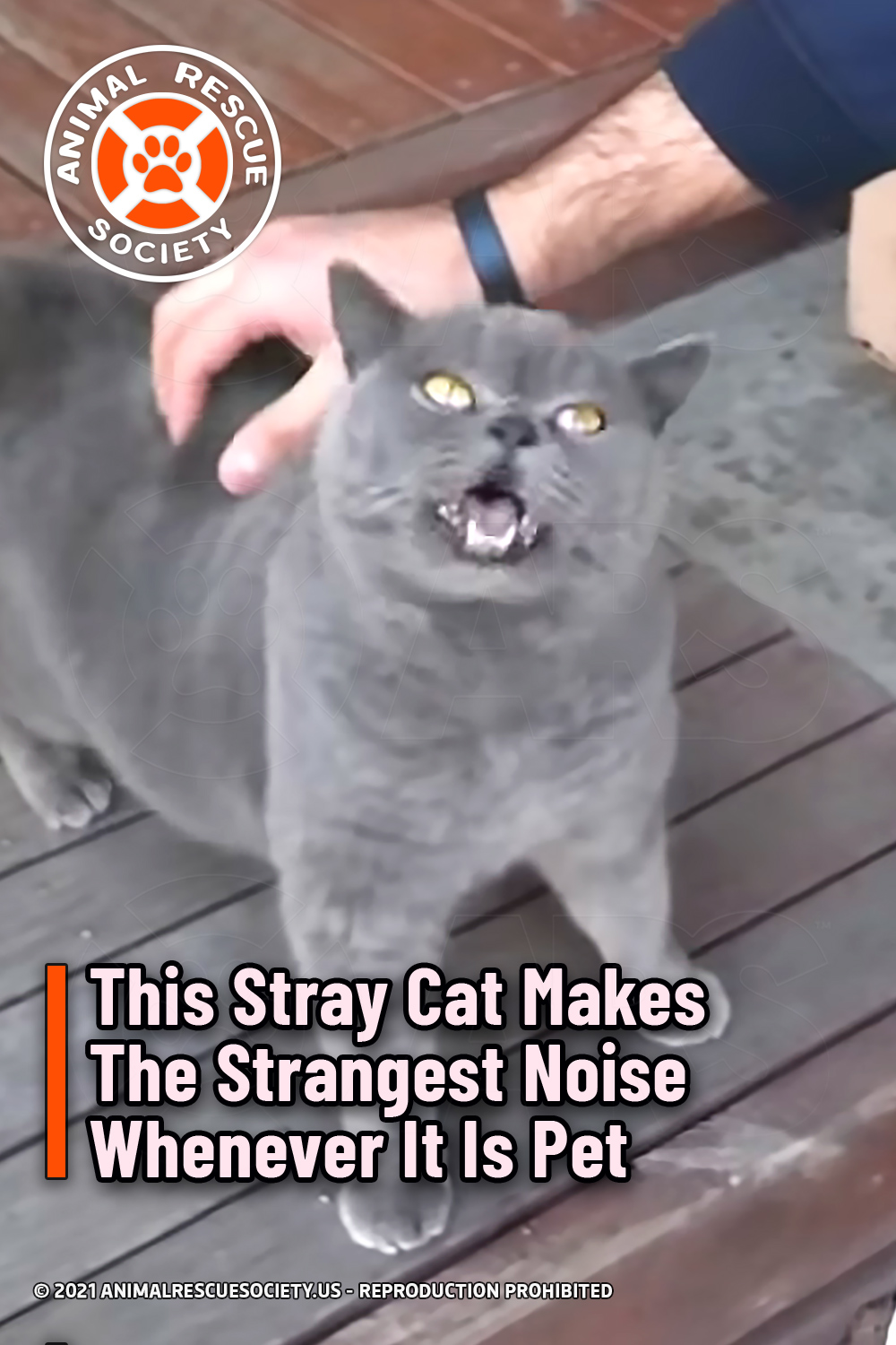 This Stray Cat Makes The Strangest Noise Whenever It Is Pet