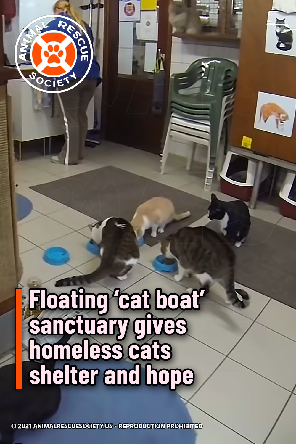 Floating 'cat boat' sanctuary gives homeless cats shelter and hope