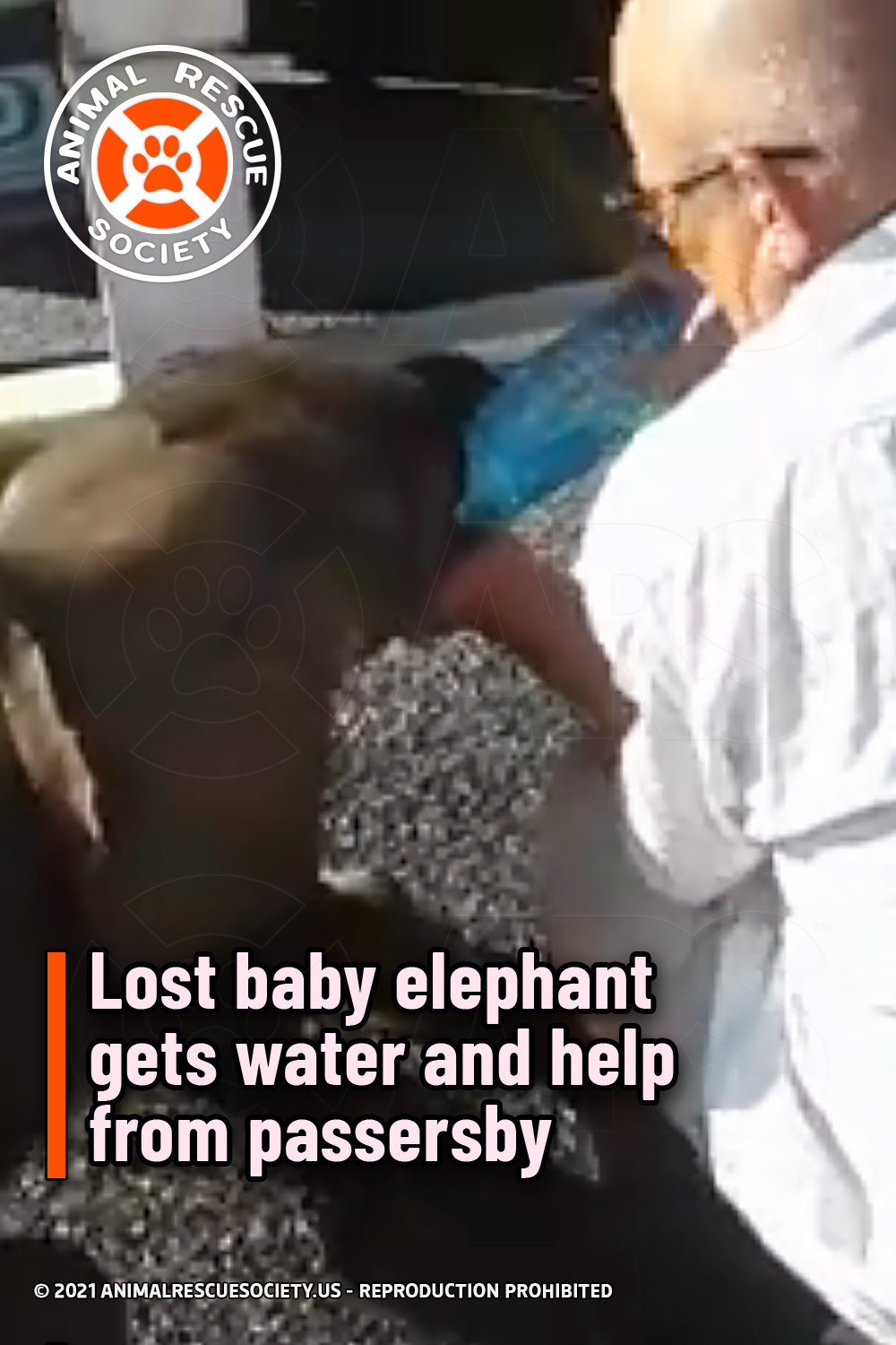 Lost baby elephant gets water and help from passersby