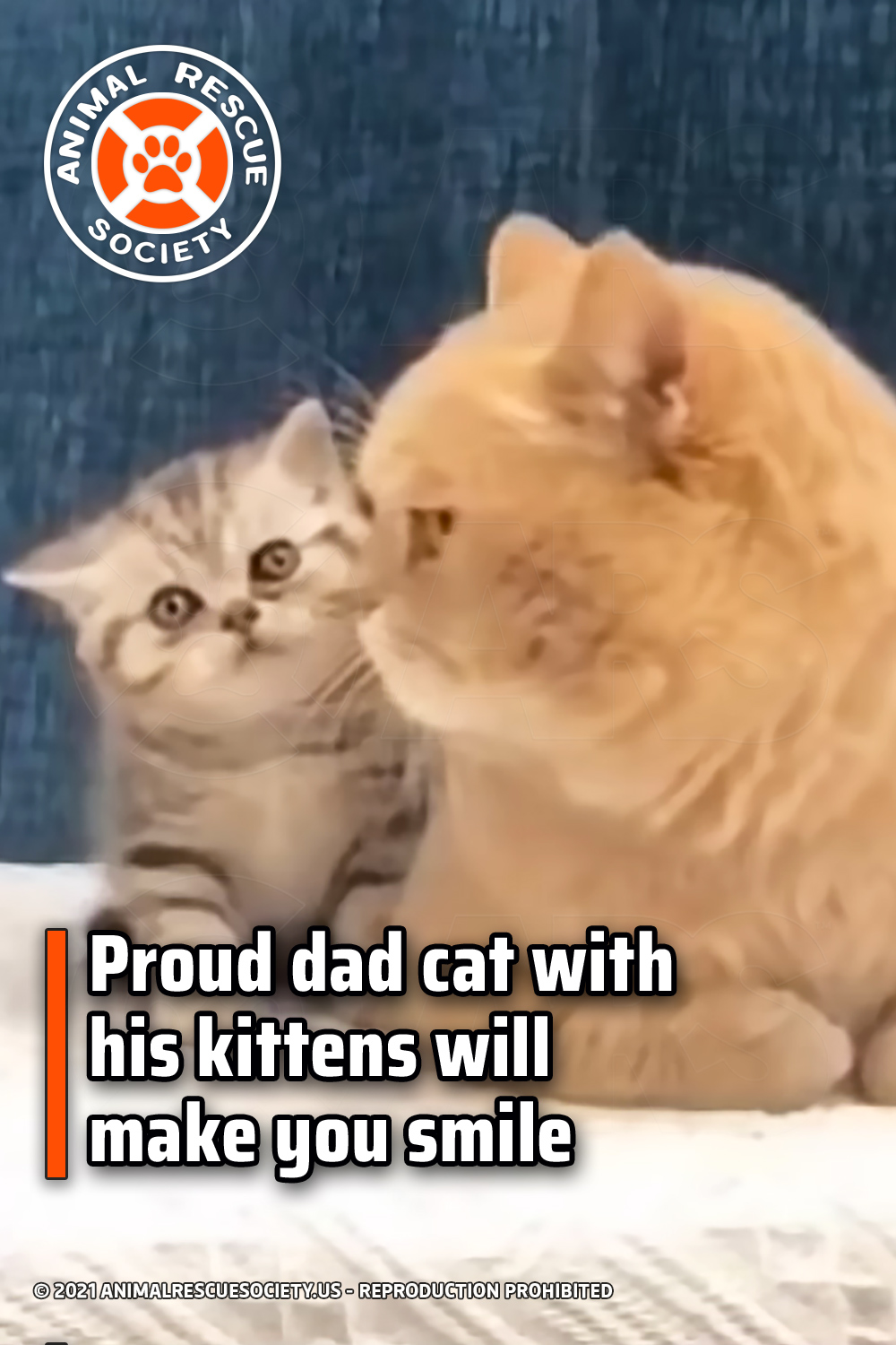 Proud dad cat with his kittens will make you smile