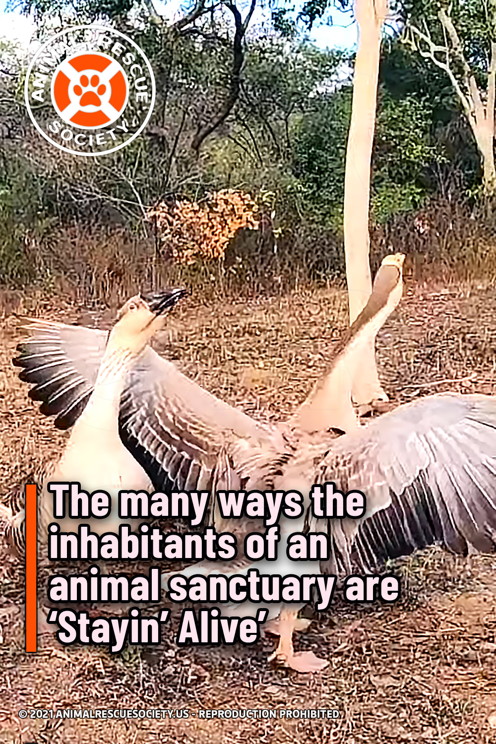 The many ways the inhabitants of an animal sanctuary are 'Stayin' Alive'