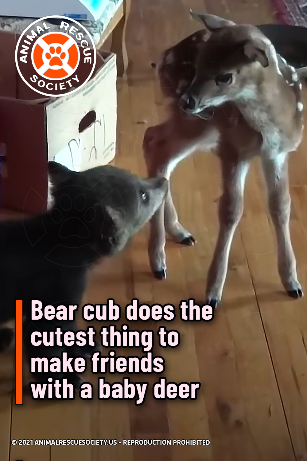 Bear cub does the cutest thing to make friends with a baby deer