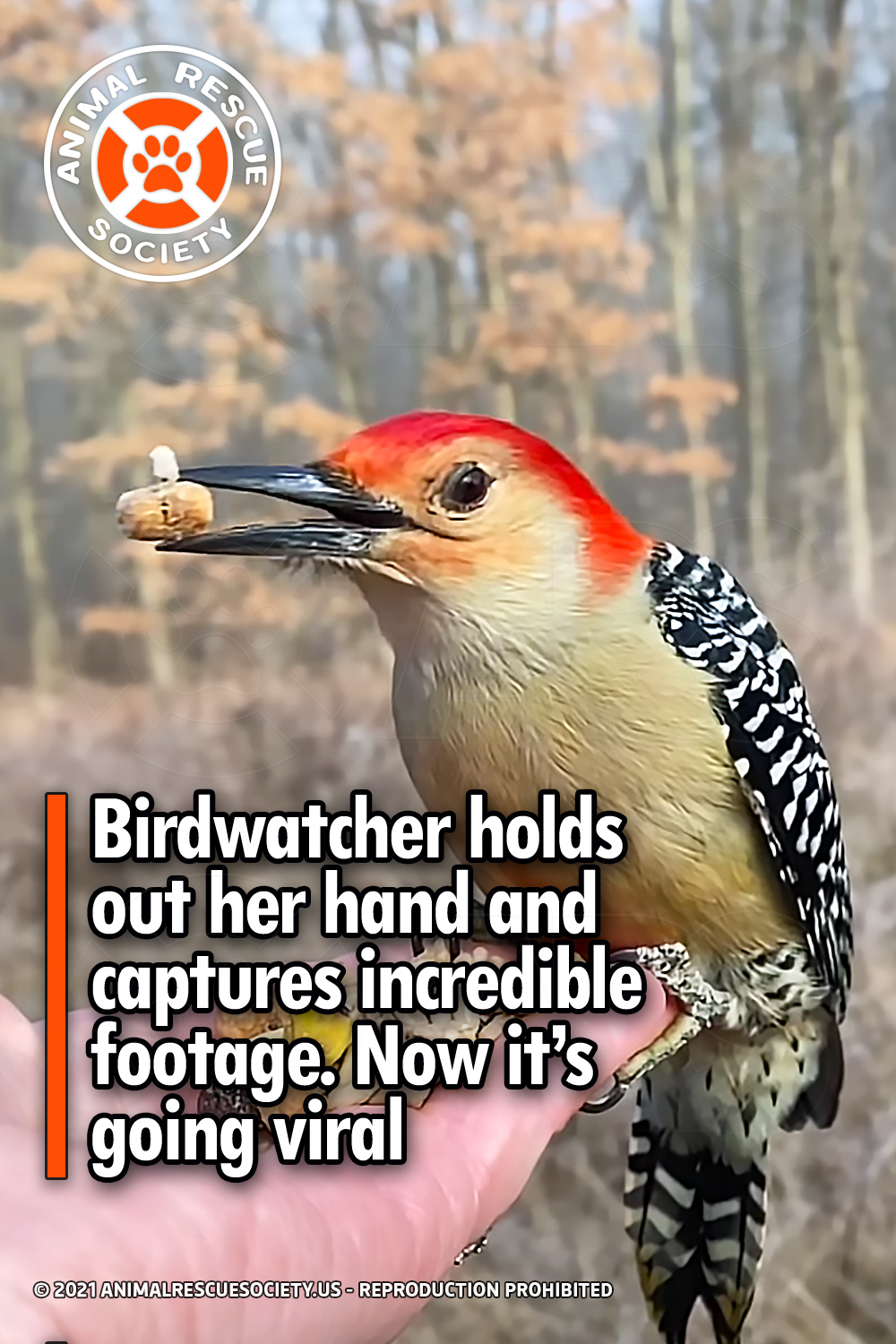 Birdwatcher holds out her hand and captures incredible footage. Now it's going viral