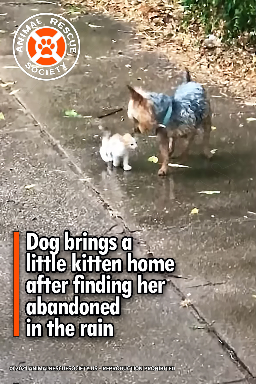 Dog brings a little kitten home after finding her abandoned in the rain