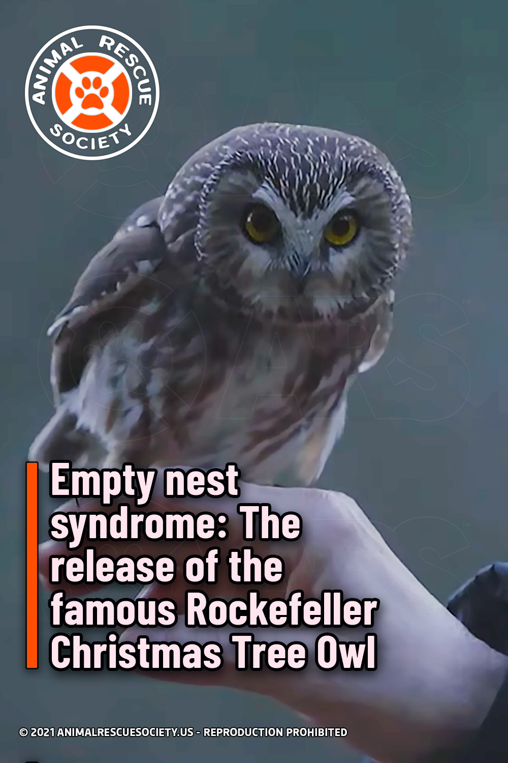 Empty nest syndrome: The release of the famous Rockefeller Christmas Tree Owl