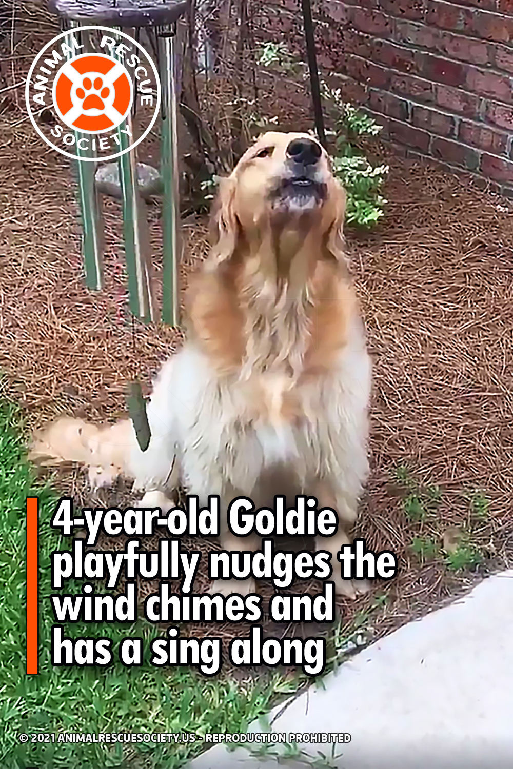 4-year-old Goldie playfully nudges the wind chimes and has a sing along