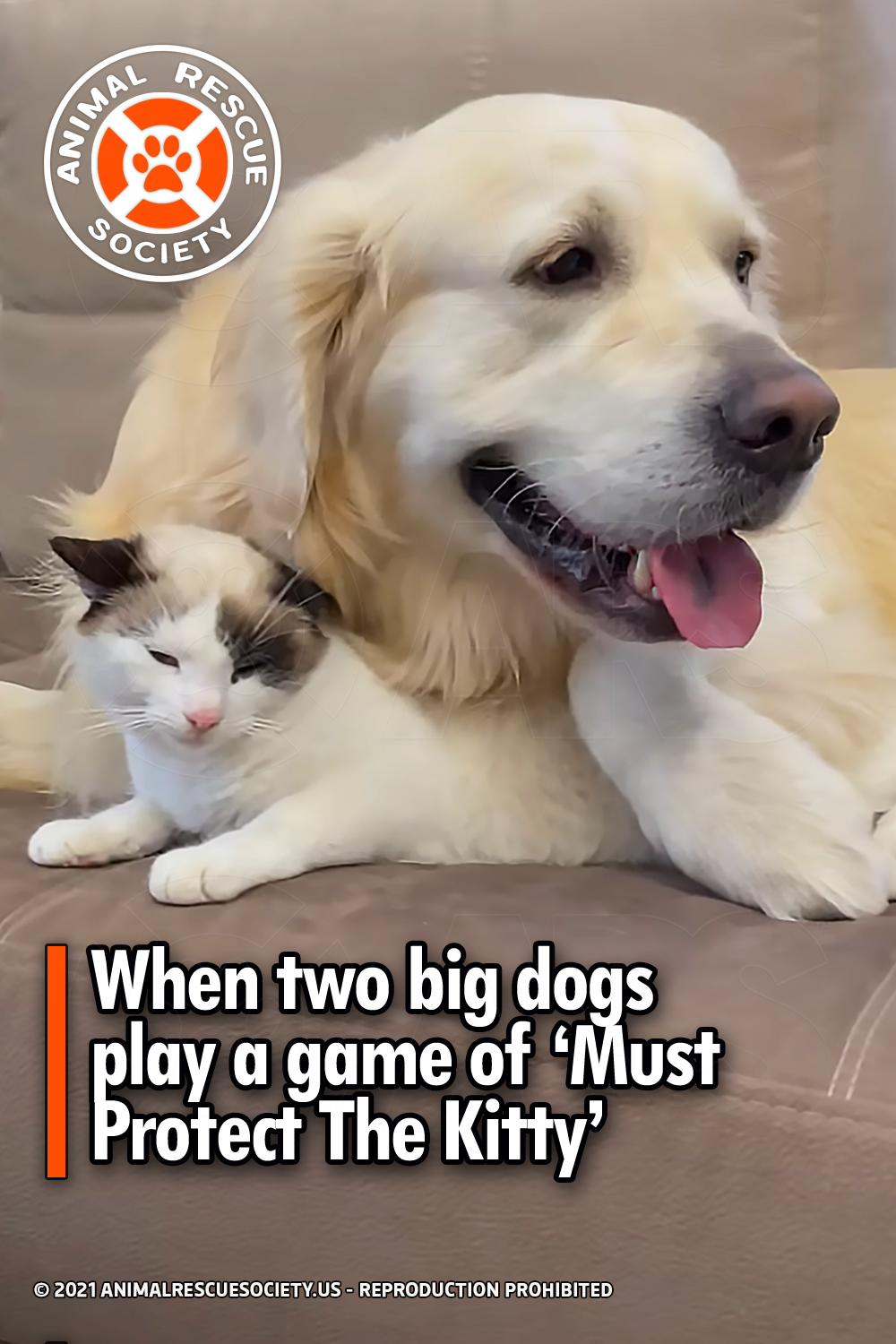When two big dogs play a game of 'Must Protect The Kitty'