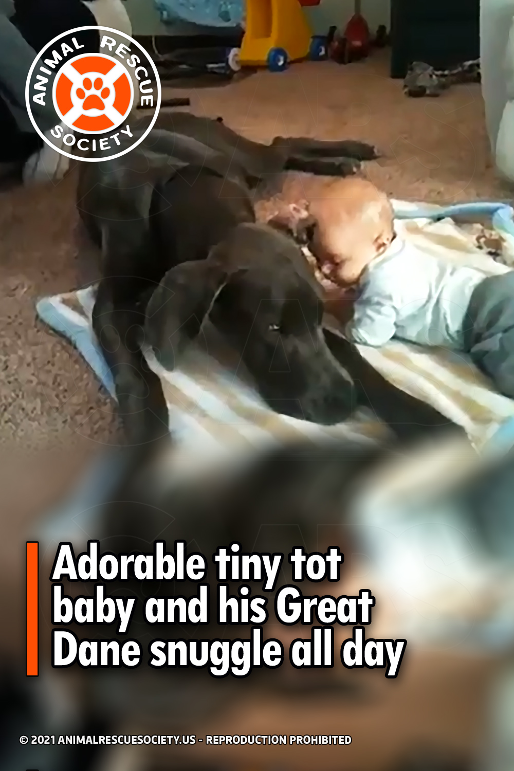 Adorable tiny tot baby and his Great Dane snuggle all day