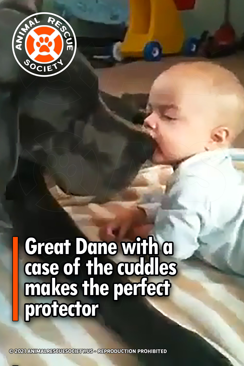 Great Dane with a case of the cuddles makes the perfect protector
