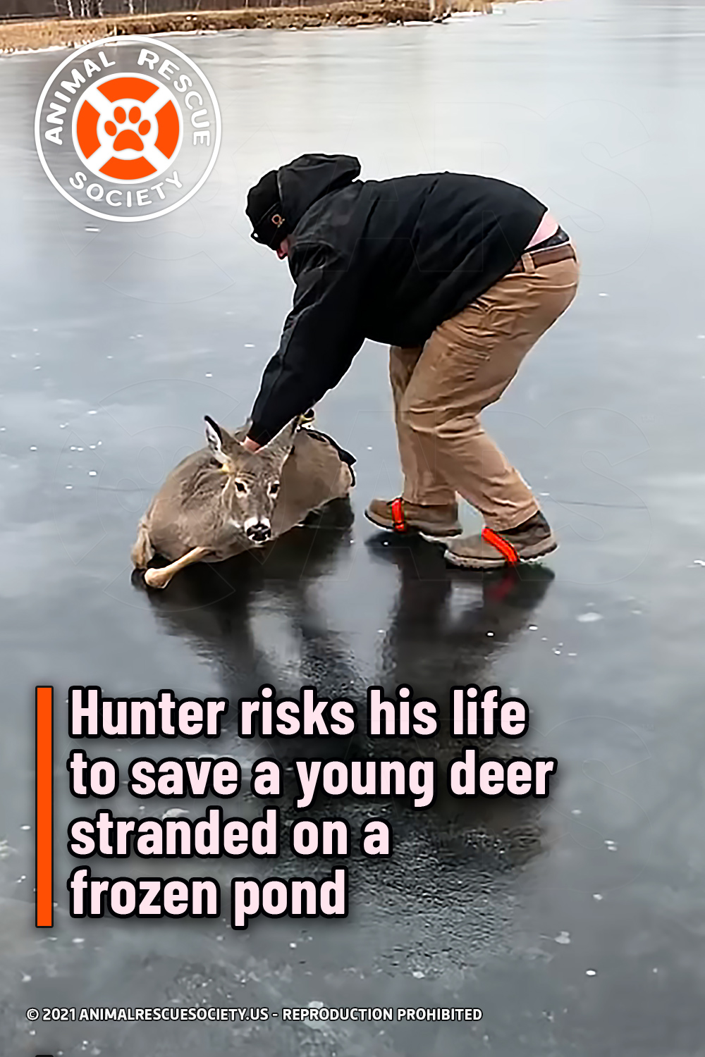 Hunter risks his life to save a young deer stranded on a frozen pond