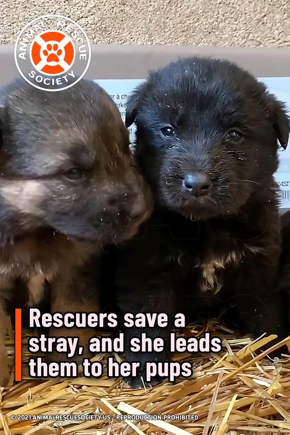 Rescuers save a stray, and she leads them to her pups