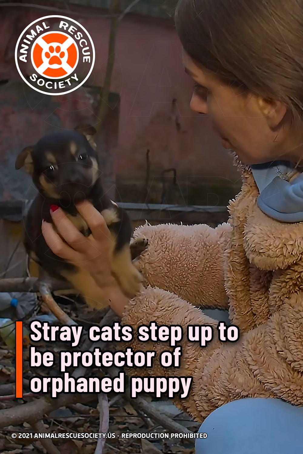Stray cats step up to be protector of orphaned puppy