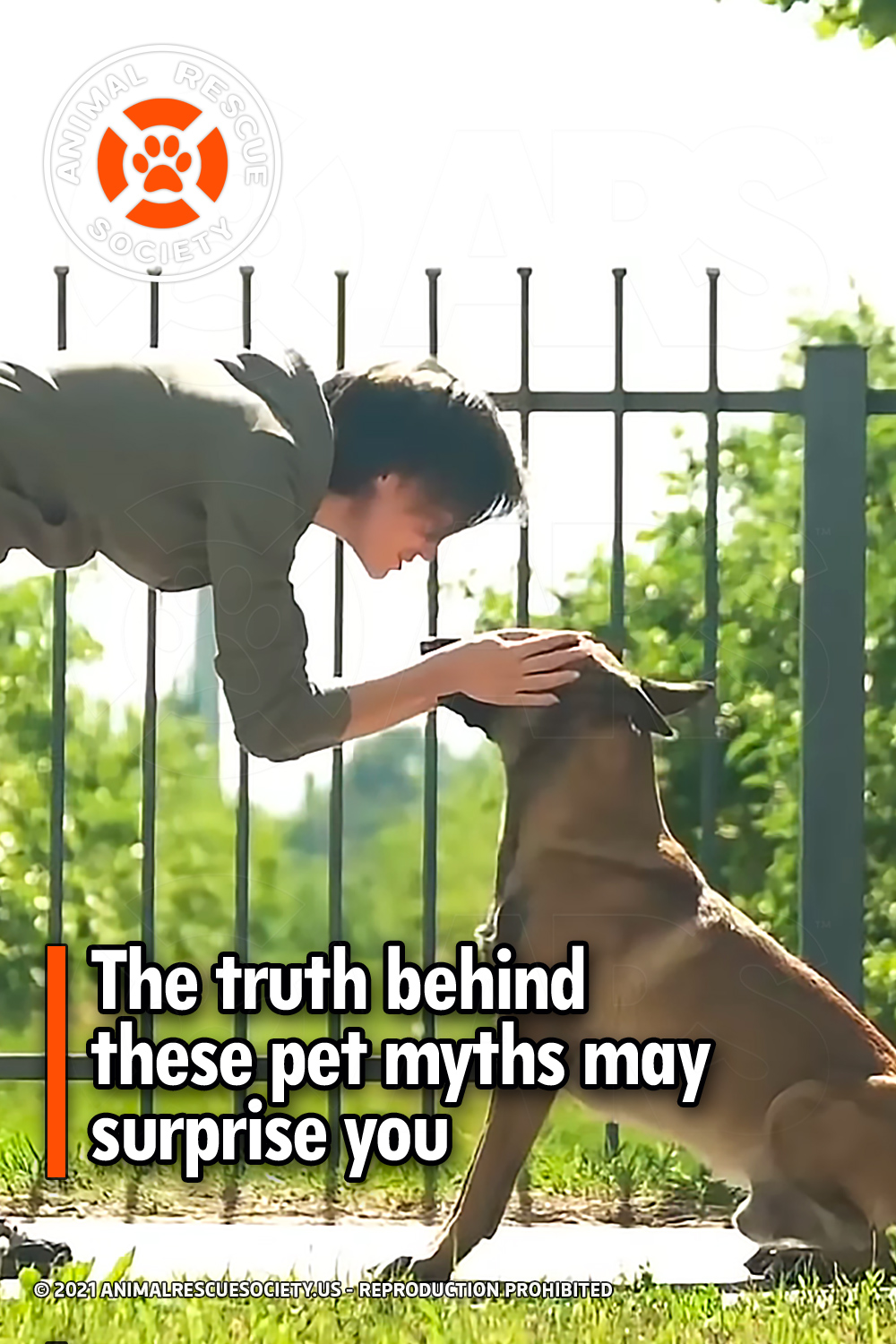 The truth behind these pet myths may surprise you