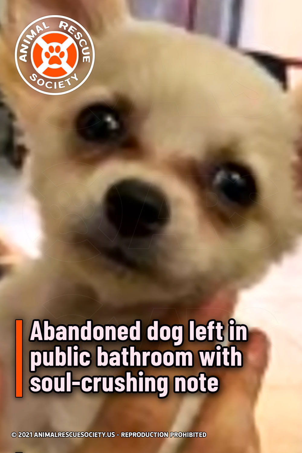 Abandoned dog left in public bathroom with soul-crushing note
