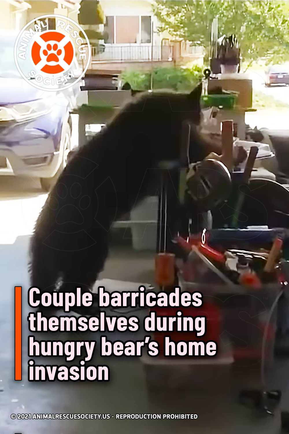 Couple barricades themselves during hungry bear's home invasion
