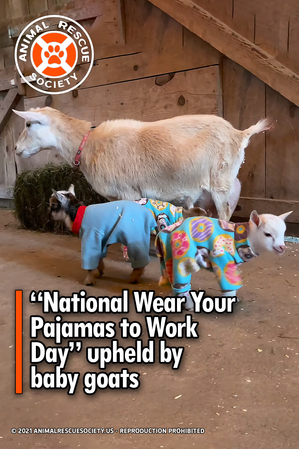 """""""National Wear Your Pajamas to Work Day"""" upheld by baby goats"""