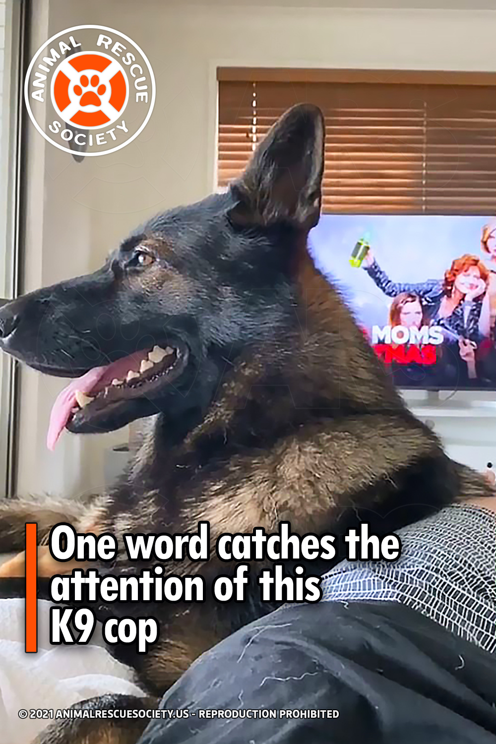 One word catches the attention of this K9 cop