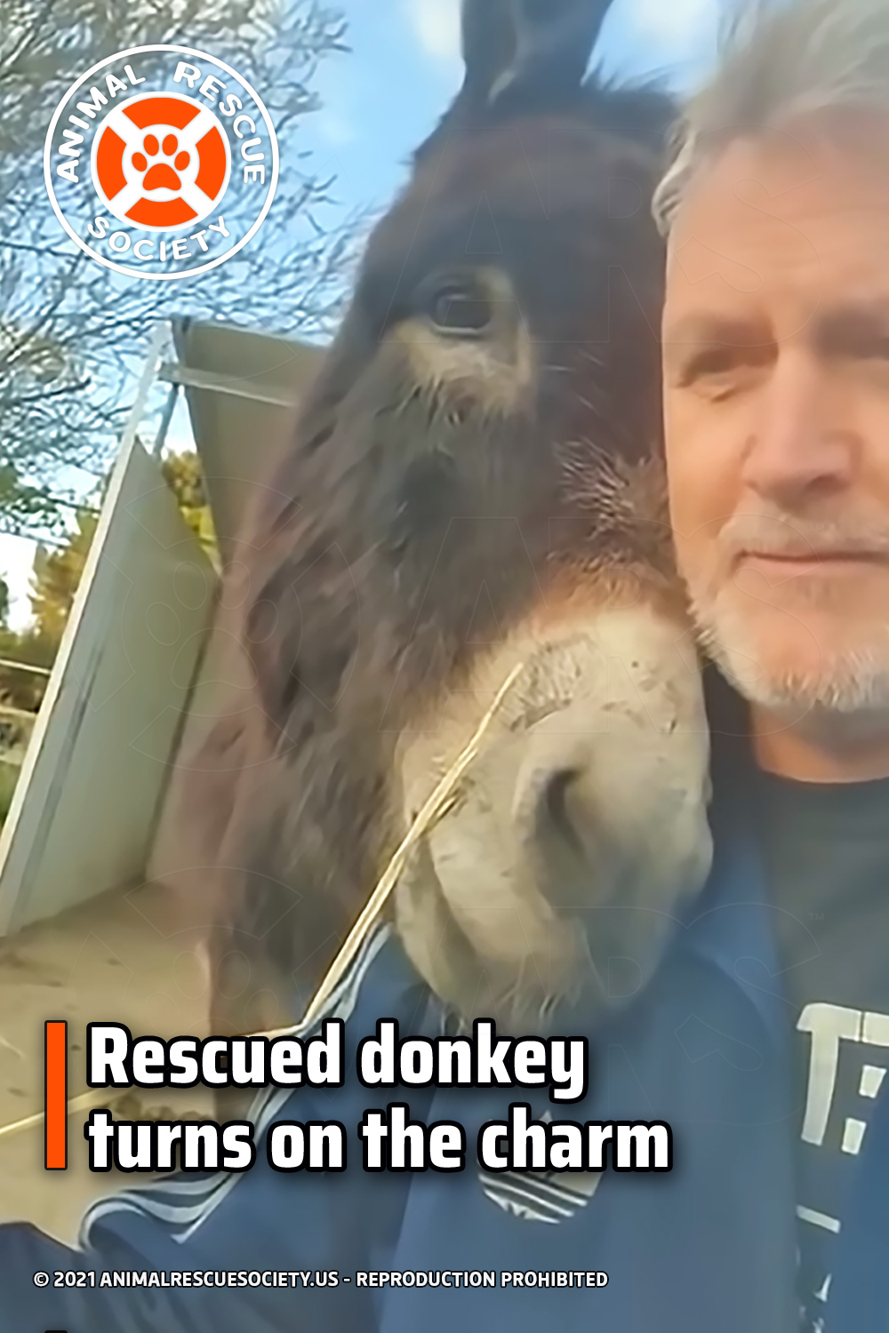 Rescued donkey turns on the charm