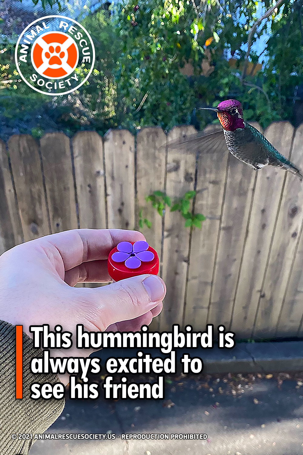 This hummingbird is always excited to see his friend