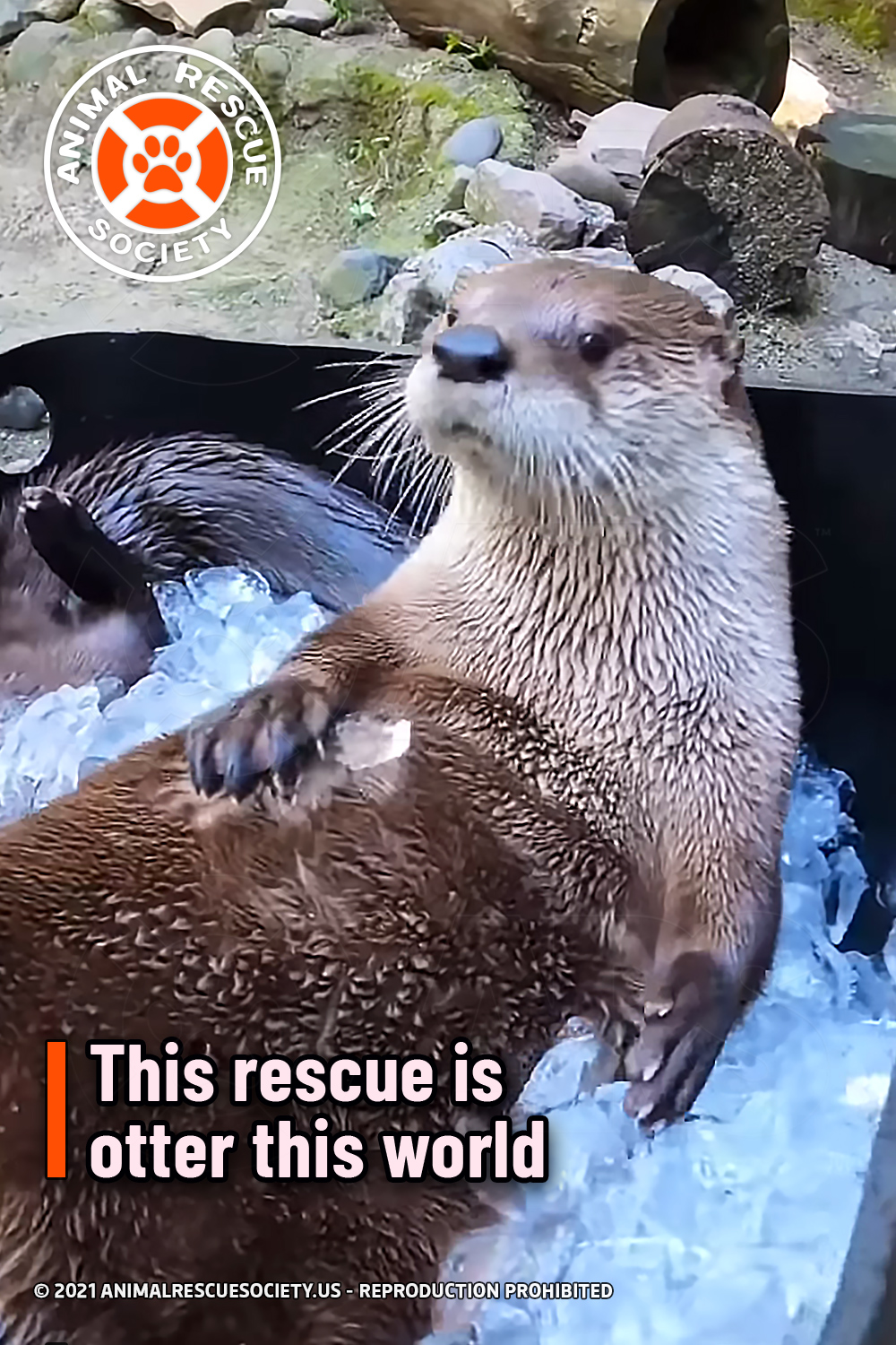This rescue is otter this world