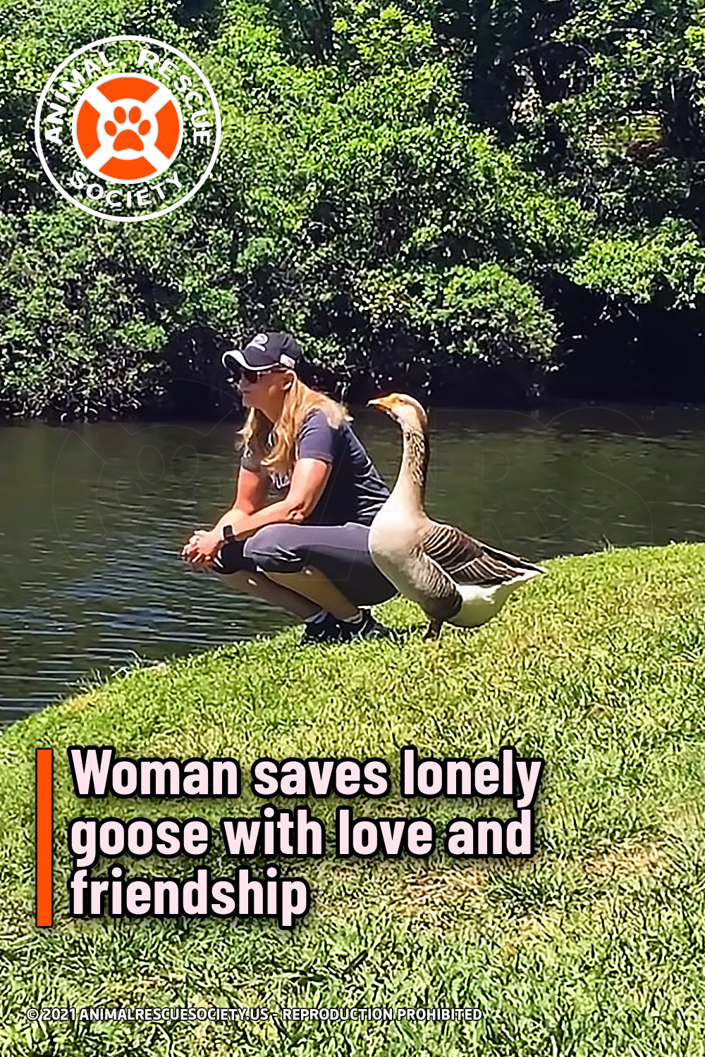 Woman saves lonely goose with love and friendship