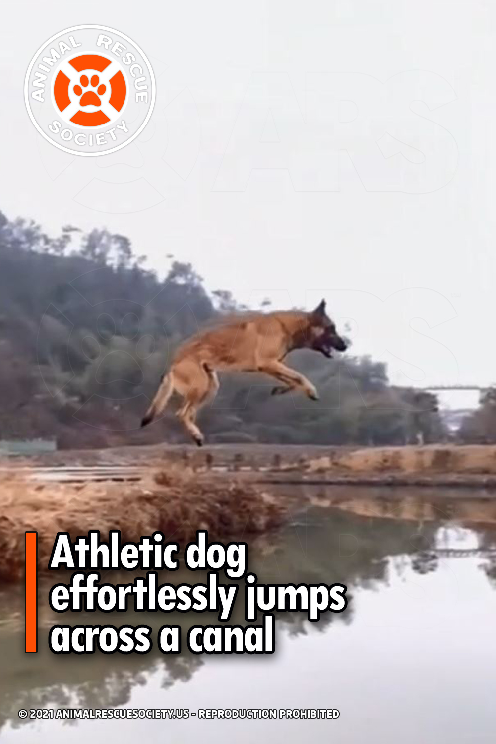 Athletic dog effortlessly jumps across a canal