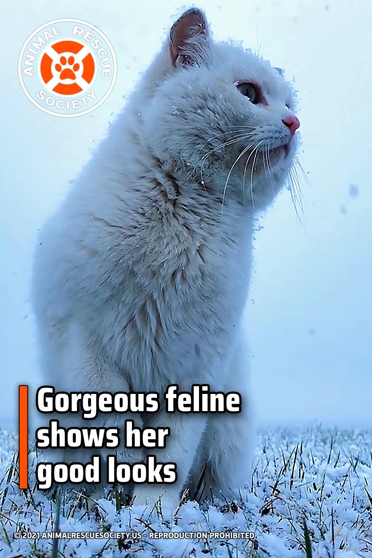 Gorgeous feline shows her good looks
