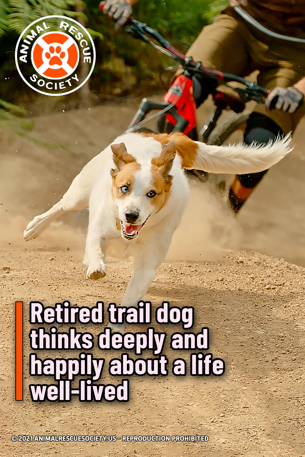 Retired trail dog thinks deeply and happily about a life well-lived