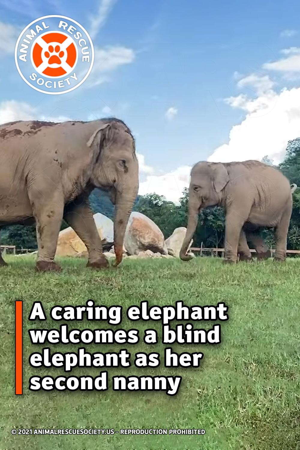 A caring elephant welcomes a blind elephant as her second nanny