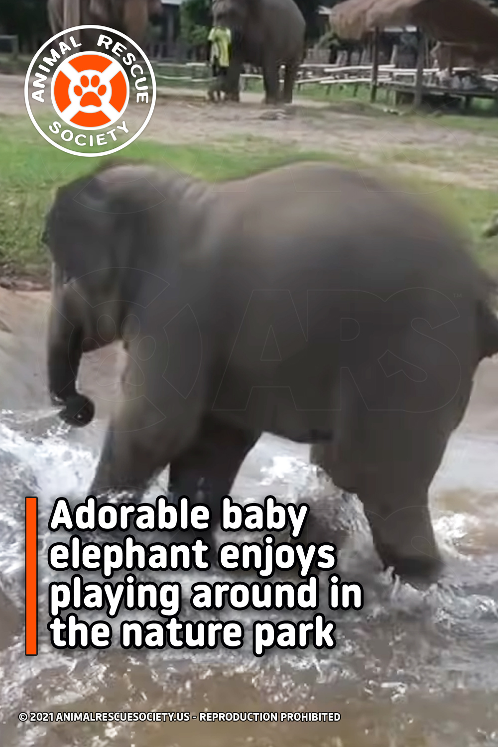 Adorable baby elephant enjoys playing around in the nature park